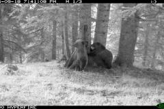 Bosc de Bonabé 18-09-2015 1 femella i 1 cadell 1er any PS (1)