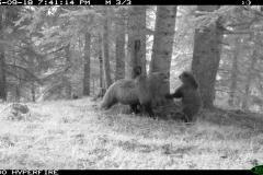 Bosc de Bonabé 18-09-2015 1 femella i 1 cadell 1er any PS (3)