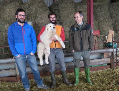 Perros de protección de los rebaños