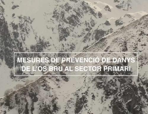 """""""Medidas de prevención de daños de oso al sector primario"""" (18'51"""")"""