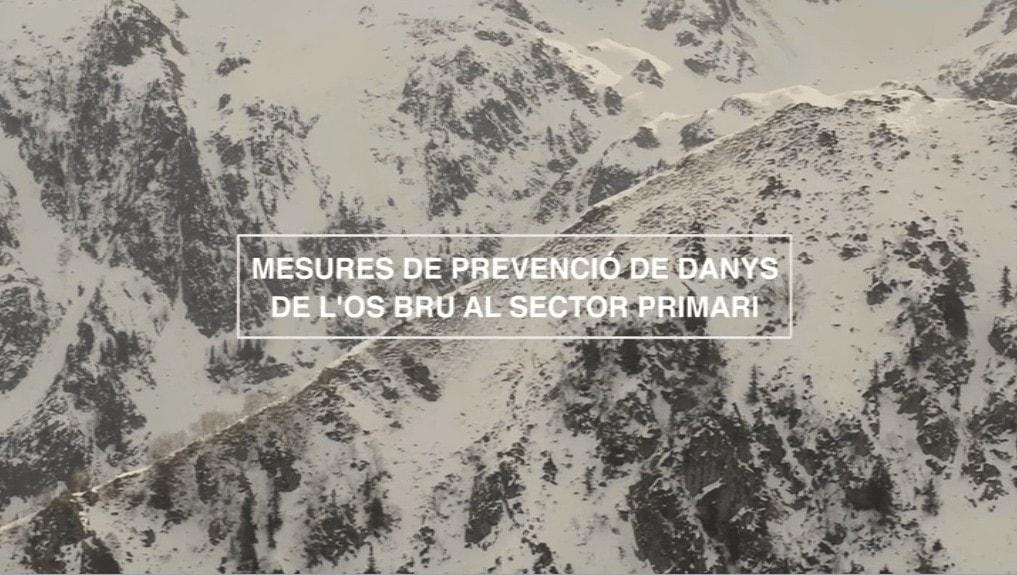 Mesures de prevenció de danys de l'os bru al sector primari – Aranès