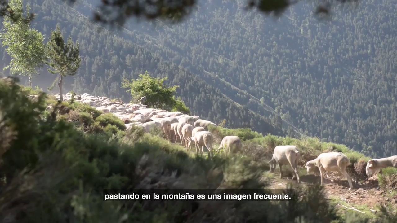 Els gossos de protecció i les activitats de lleure a la natura –Aranès